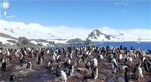 pinguins antartica
